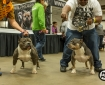 allentown-bully-convention2-24
