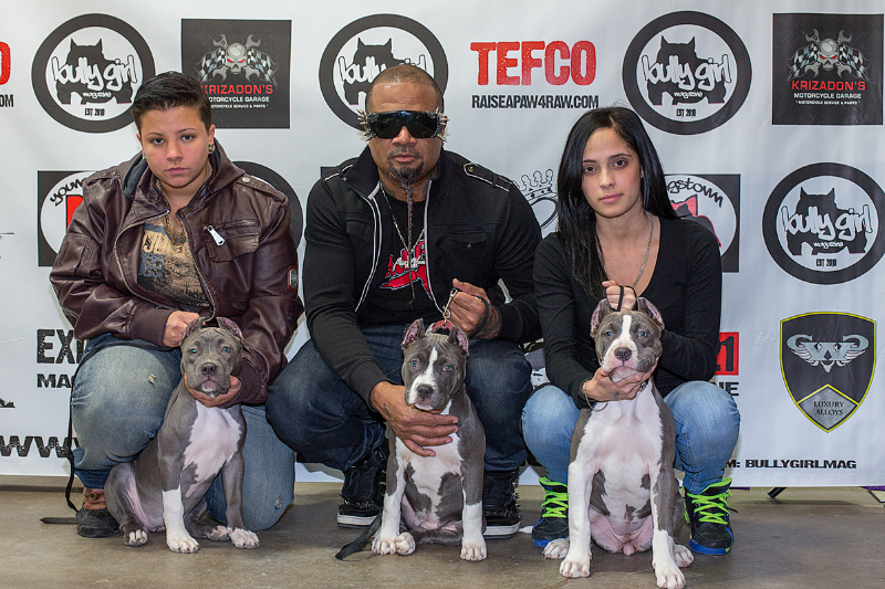 Bully Dog Show In Allentown Pa