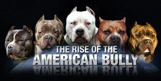Rise of the American Bully