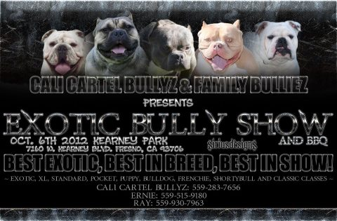 CA Exotic Bully Show