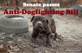 Anti-dogfighting photo