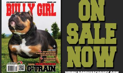 bully-girl-issue-45-promo