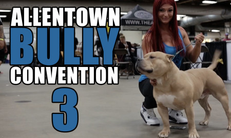 allentown-bully-convention-3