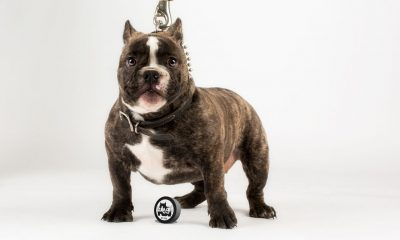 Bully Breed Photo Contest #32