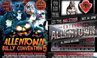Annual Allentown Bully Show Flyer