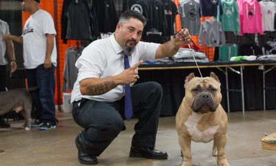 The Allentown Bully Convention 5 Show