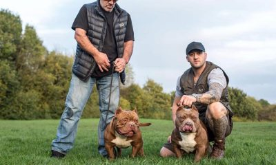 Rayment Boss Bully Kennels
