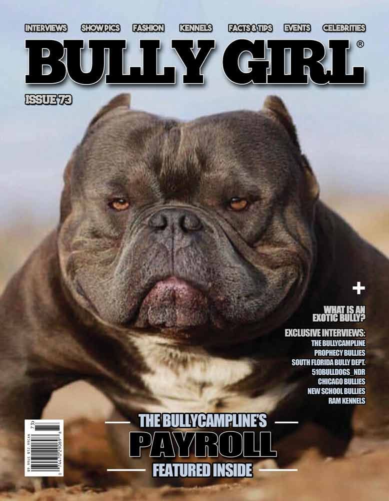 bulldog magazines the 1 bully magazine for bully breed enthusiasts 5033